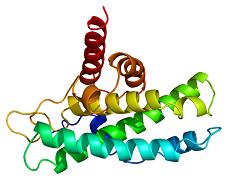 assumi-troppe-proteine